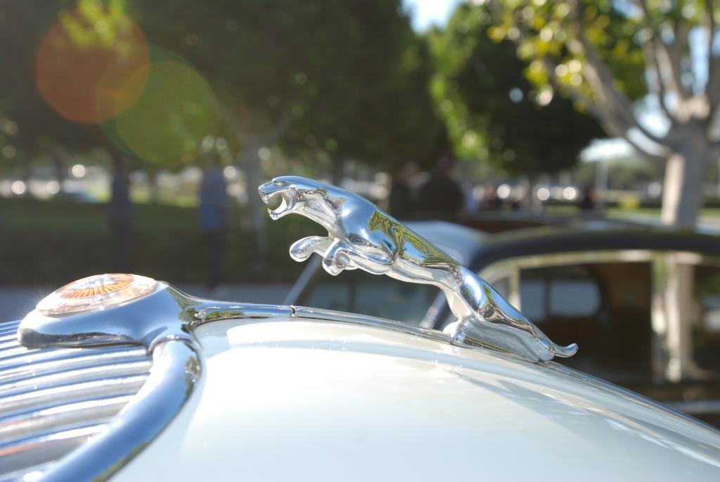 white Jaguar XK 150_hood emblem_Cars&Coffee/Irvine_1/28/12